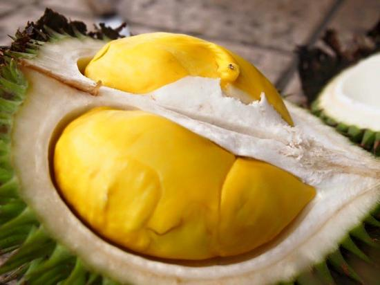 Durian is a nutritious fruit for babies, but care should be taken not to eat too much.