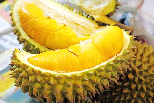 durian-fruit-can-kill