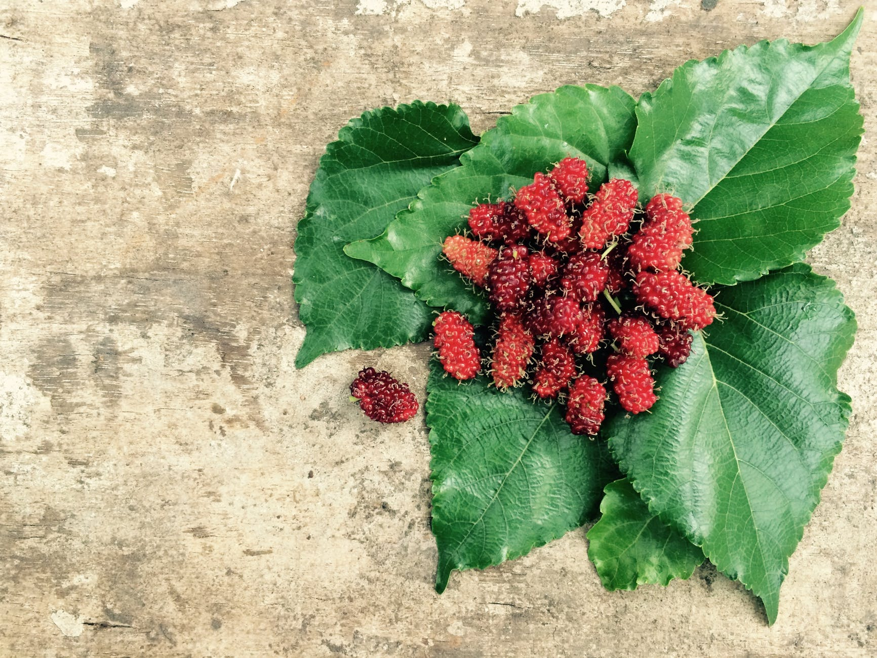 Mulberry:Nutrition value, benefits, food precautions, pregnant women and baby can eat?