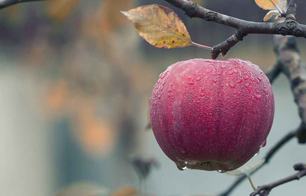 What food does the apple match?  What can't an apple eat at the same time?